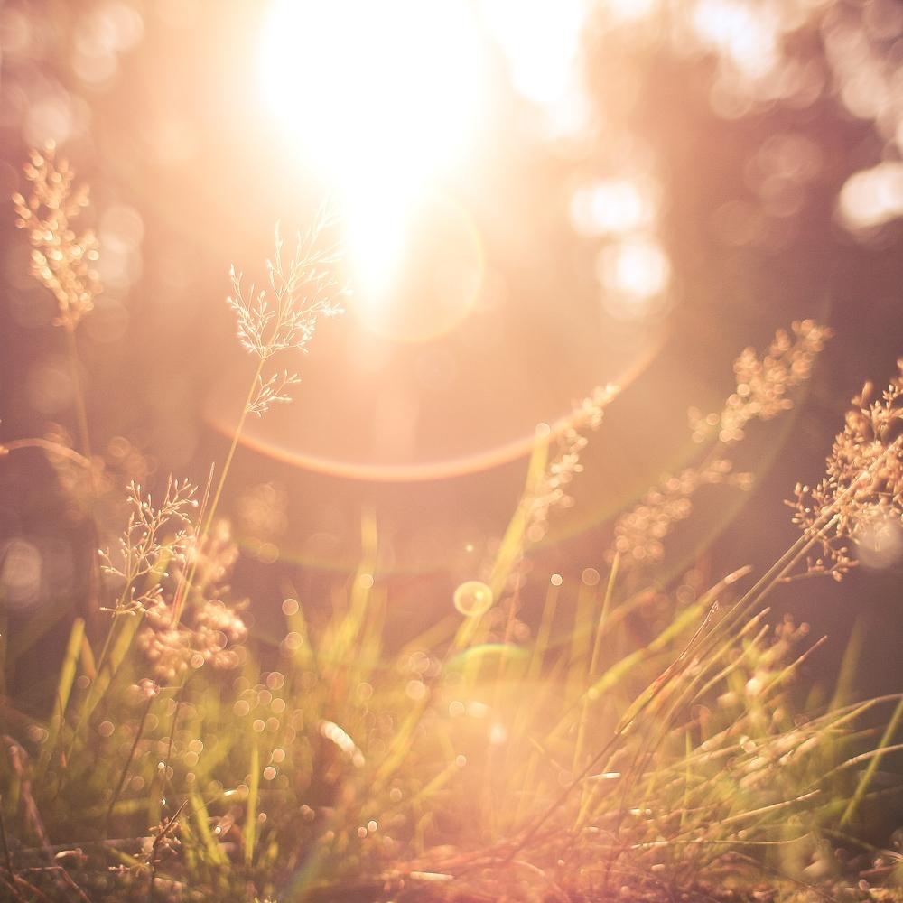 Sun and Grass.jpg