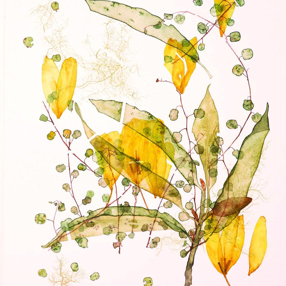 Kohl Tyler-Dunshea   Artist | Illustrator  Ph: 022 640 5859   @kohl.tyler  |  kohltylerdunshea.com  | kohltylerdunshea@gmail.com