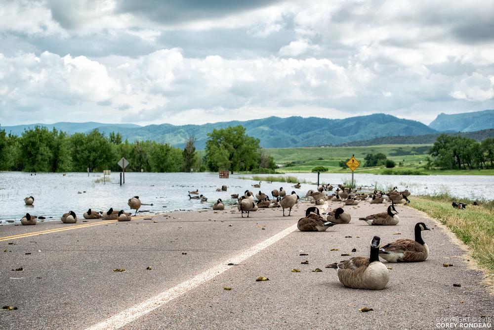 Perimeter Road —   Chatfield State Park(Littleton, CO)