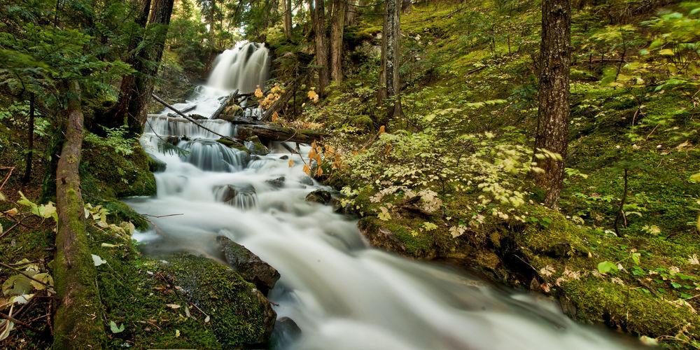 Cedars Fall 2.jpg