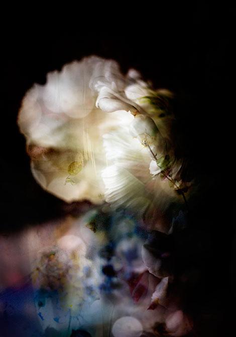 Isabelle Menin Photography