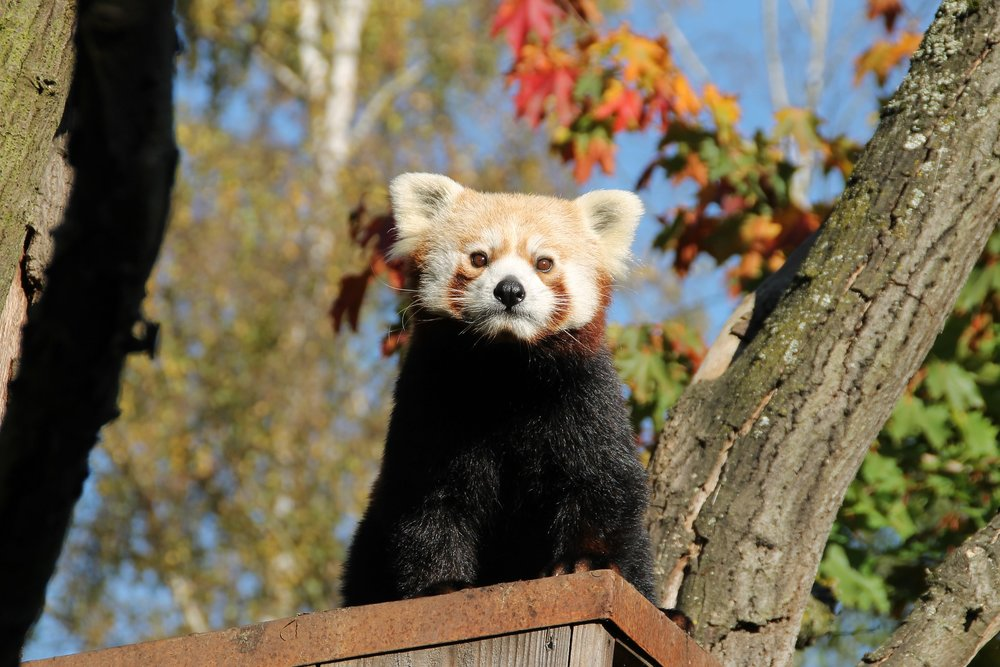 planning panda day 3.jpg