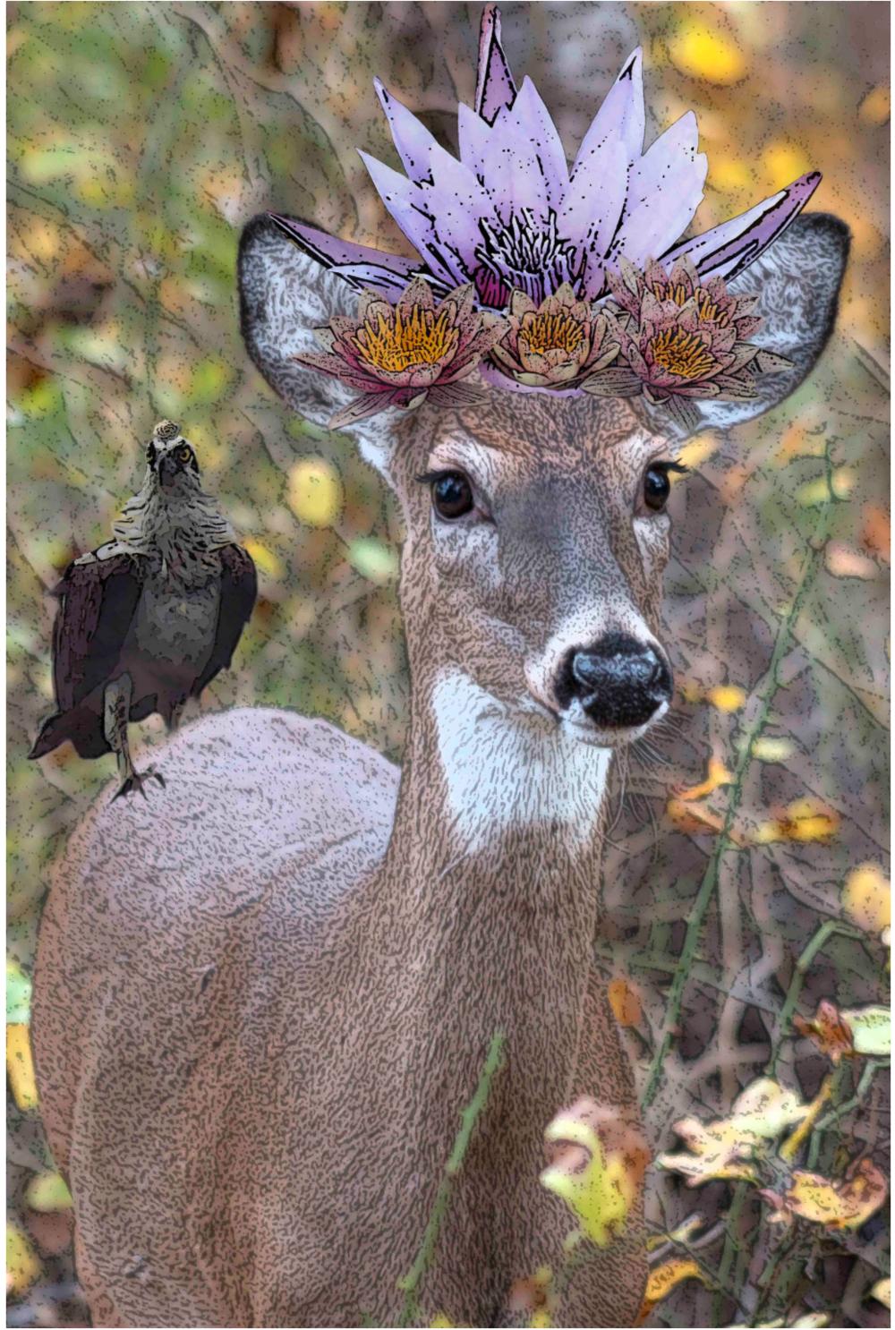 Oh Deer - 2k16 Rye Marshlands ConservancyFoto ShowRye, NY October 2k16