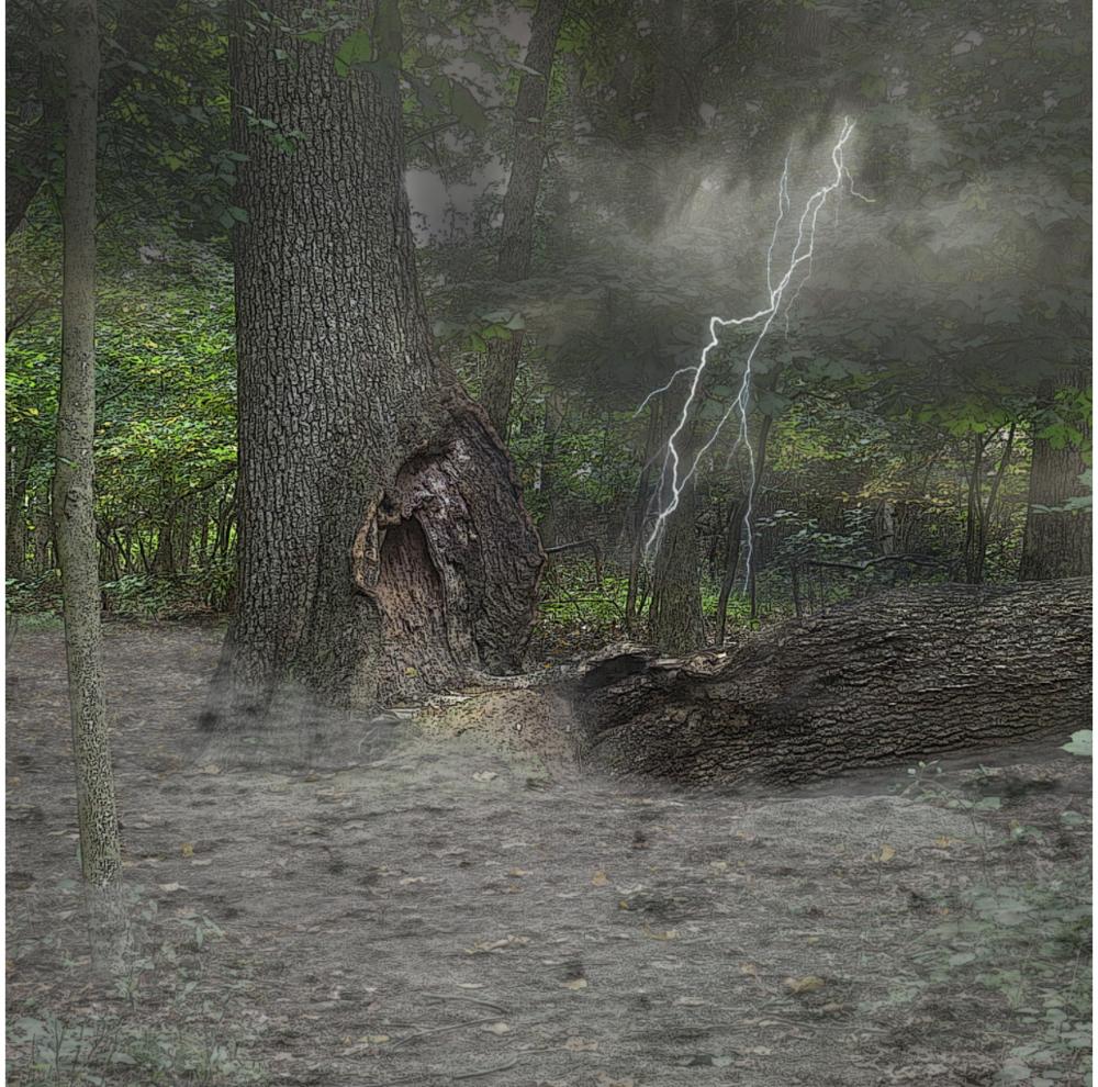 Sandra's Storm Tree - 2k15 Rye Marshlands ConservancyFoto ShowRye, NY October 2k15