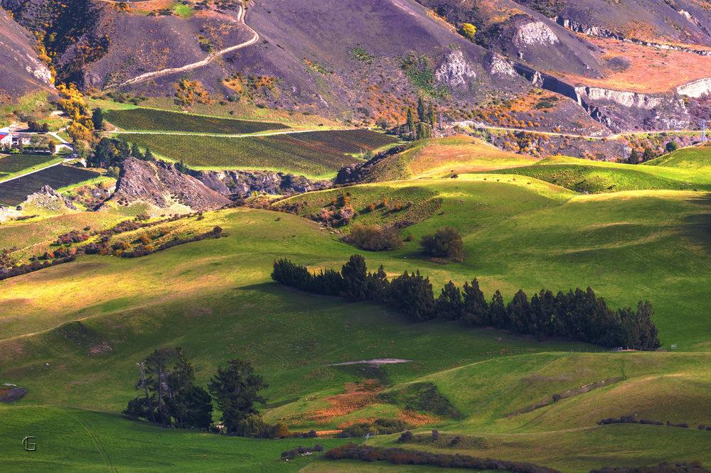Speargrass Flat