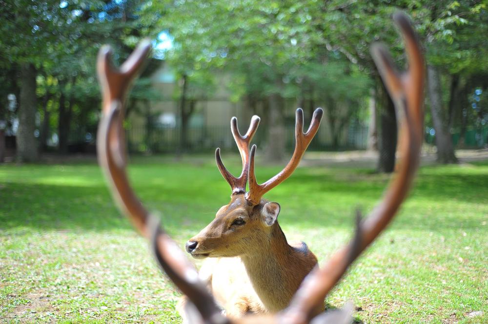 Michelle Lui_Dearly my deer.jpg