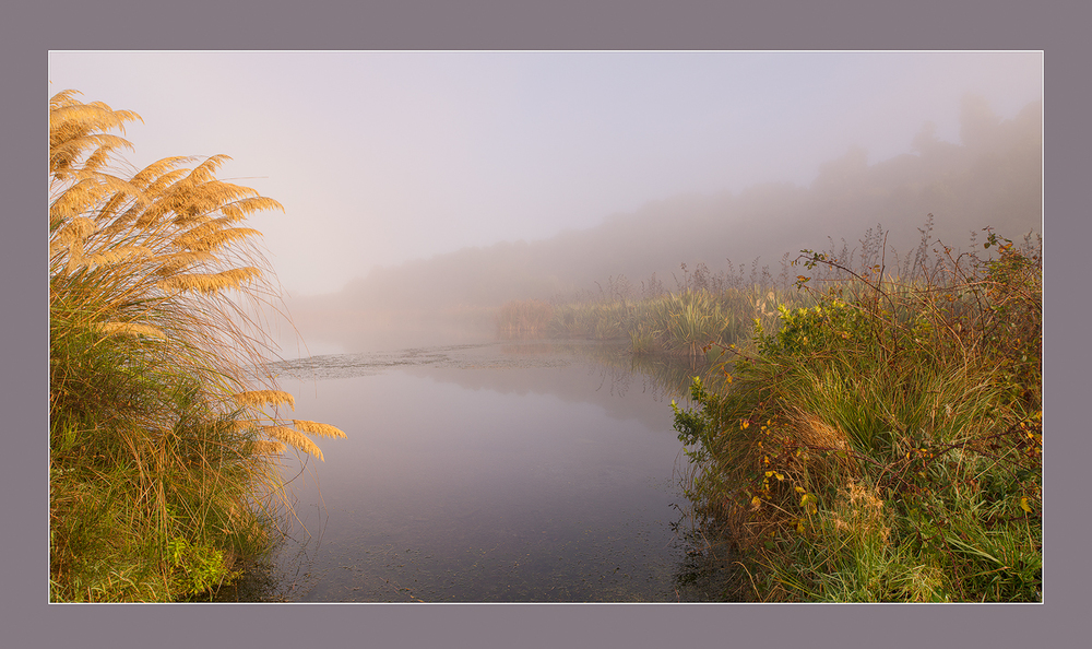 Misty morning at lake.jpg