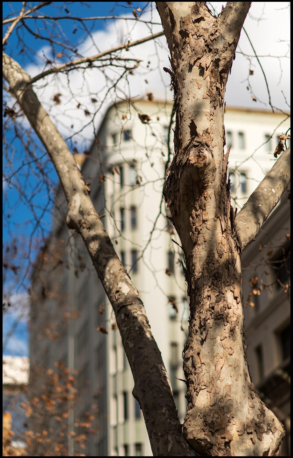 The-tree.jpg