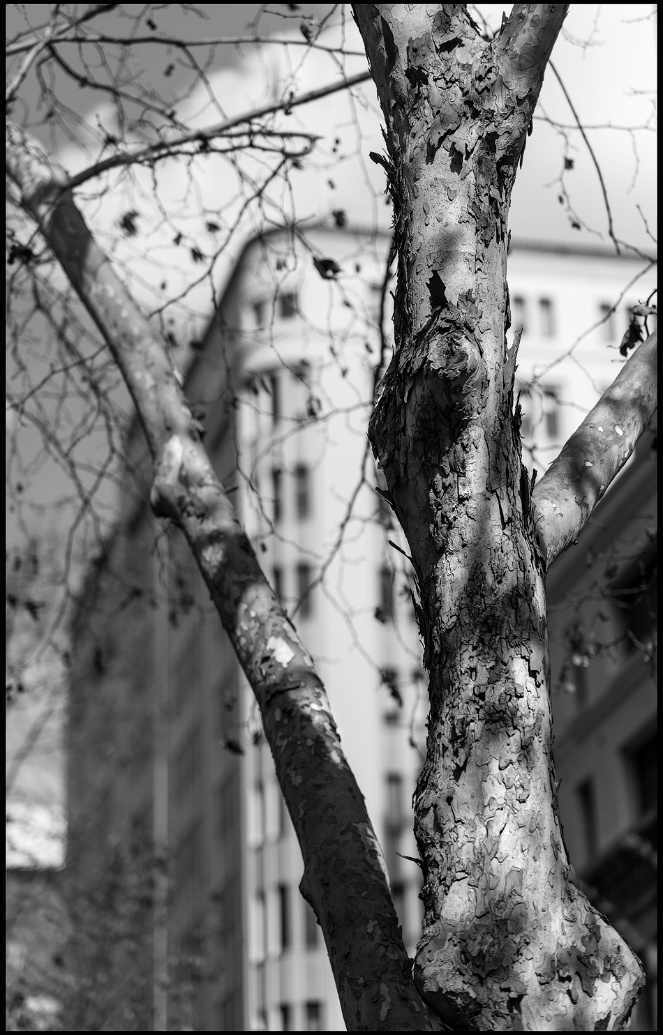 The-tree-b&w.jpg
