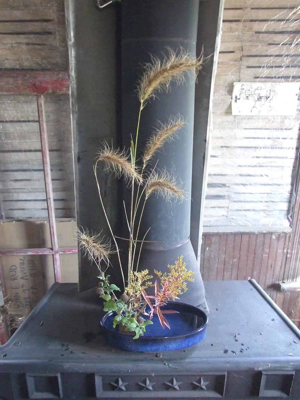 10.3.2015 Prairie Flowers