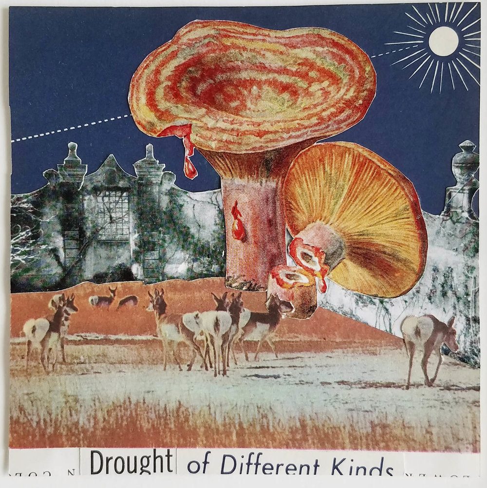 "Drought of Different Kinds  2016 Collage 5"" x 5"""