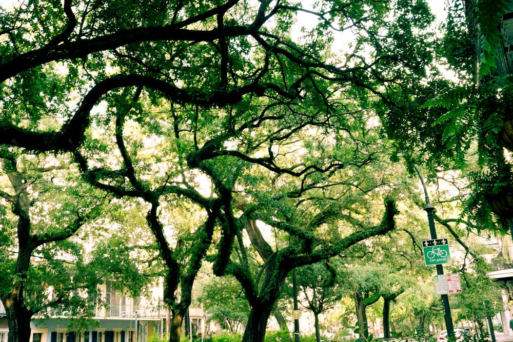 New_Orleans_2014_FujiXT1-021-Print.jpg