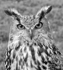 Be as wise as the owl