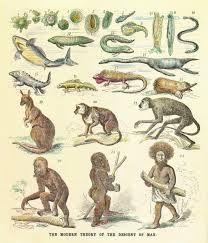 Forms of evolution