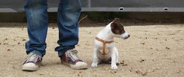 Asesoramiento en la elección del perro. Tanto de un cachorro como de un adulto, haciendo un seguimiento en su adaptación al nuevo hogar.