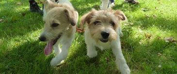 Puppy Party: la fiesta del aprendizaje . Una Puppy Party es un evento puntual cuyo objetivo es que los cachorros se socialicen entre ellos y con otras personas. En un ambiente relajado, los cachorros se divierten con sus nuevos amigos.