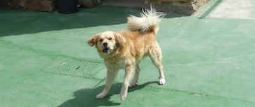 Tratamiento de la agresividad. Un perro no es agresivo porque sí, siempre existe una causa que hay que conocer para solucionar el problema.