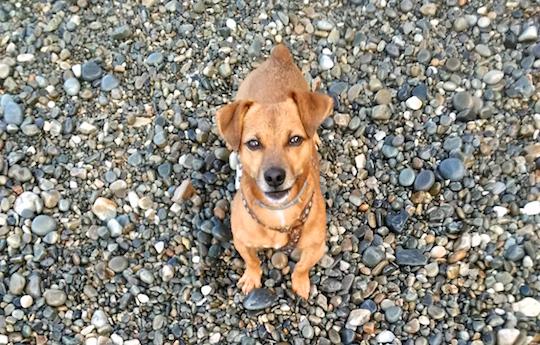 JR Batallé Educación y adiestramiento canino