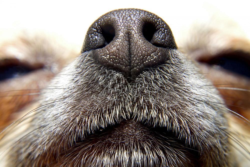 nariz-perros.jpg