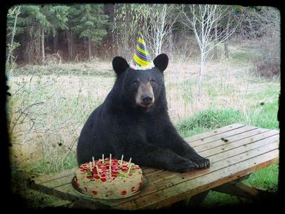 bear birthday Bear's 1st annual Birthday Bash — Bear's BMX & BS bear birthday