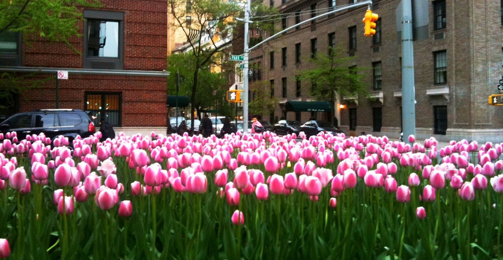 East side gastroenterology for Flowers union square nyc