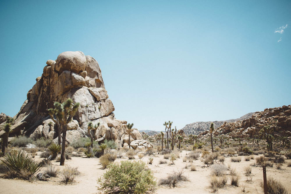 lex_mike_joshua_tree_photography_5274.jpg