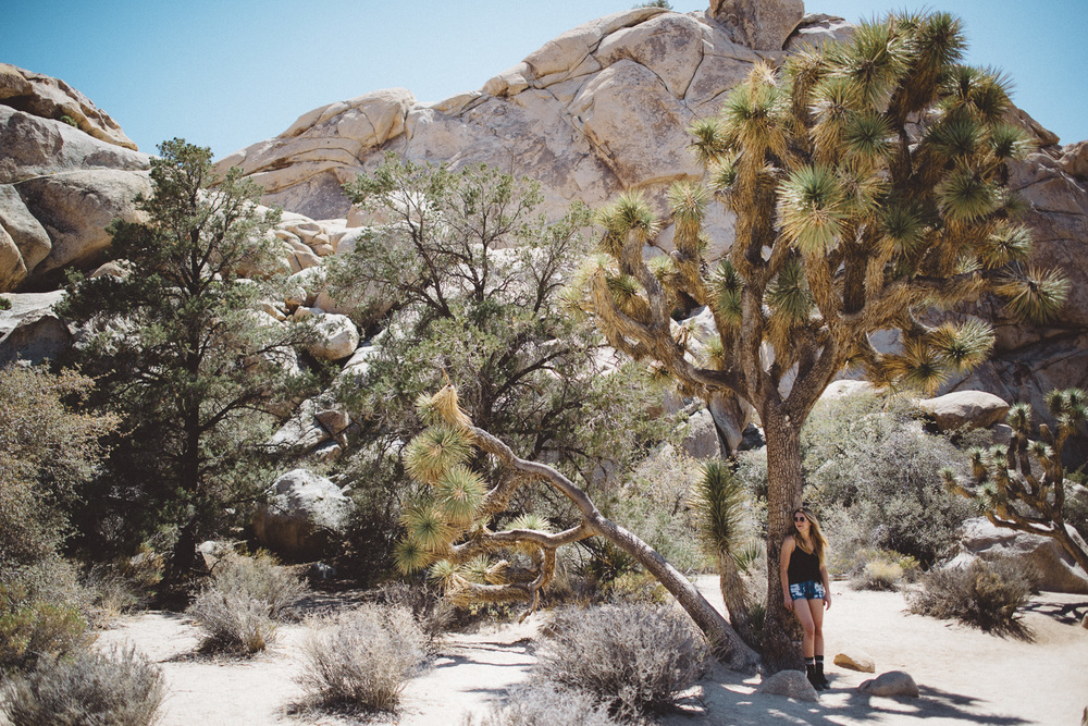 lex_mike_joshua_tree_photography_5336.jpg