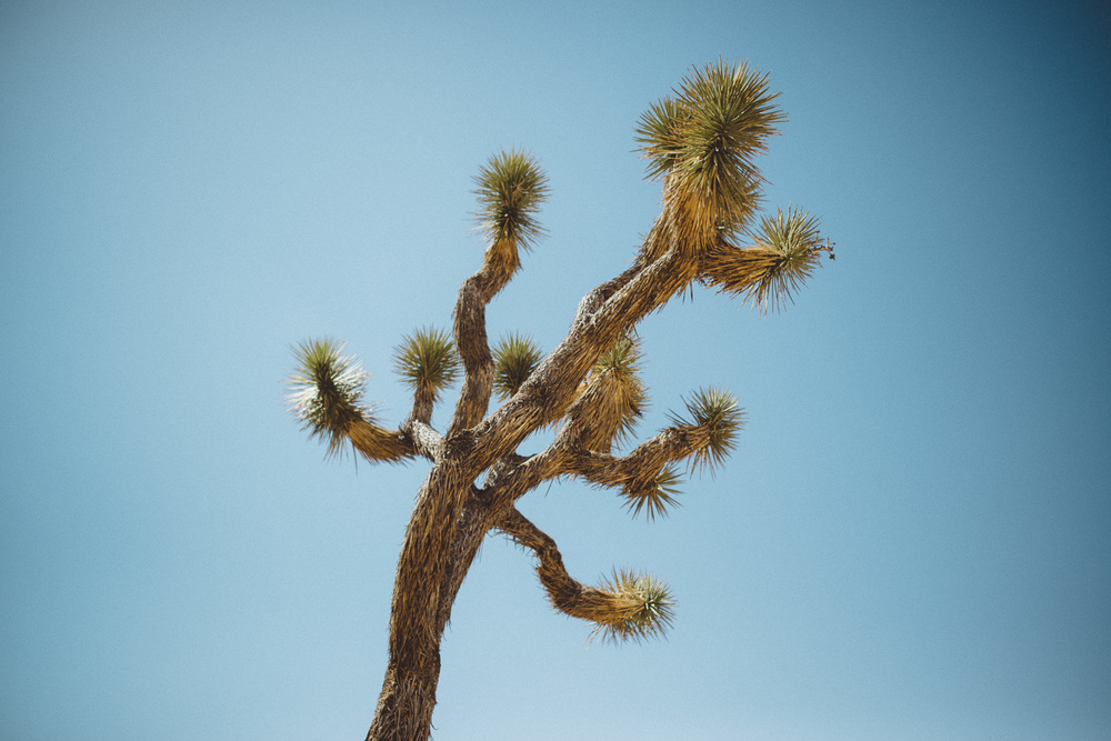 lex_mike_joshua_tree_photography_5354.jpg