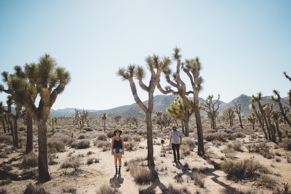 lex_mike_joshua_tree_photography_5591.jpg