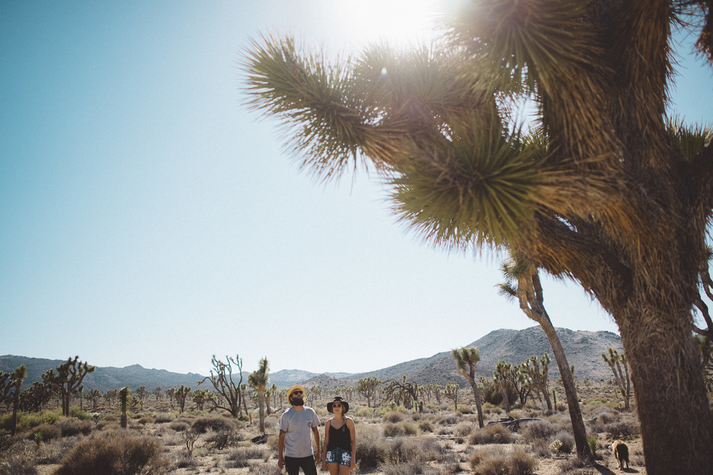 lex_mike_joshua_tree_photography_5594.jpg
