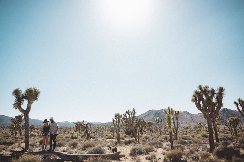 lex_mike_joshua_tree_photography_5619.jpg