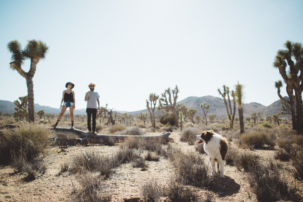 lex_mike_joshua_tree_photography_5628.jpg