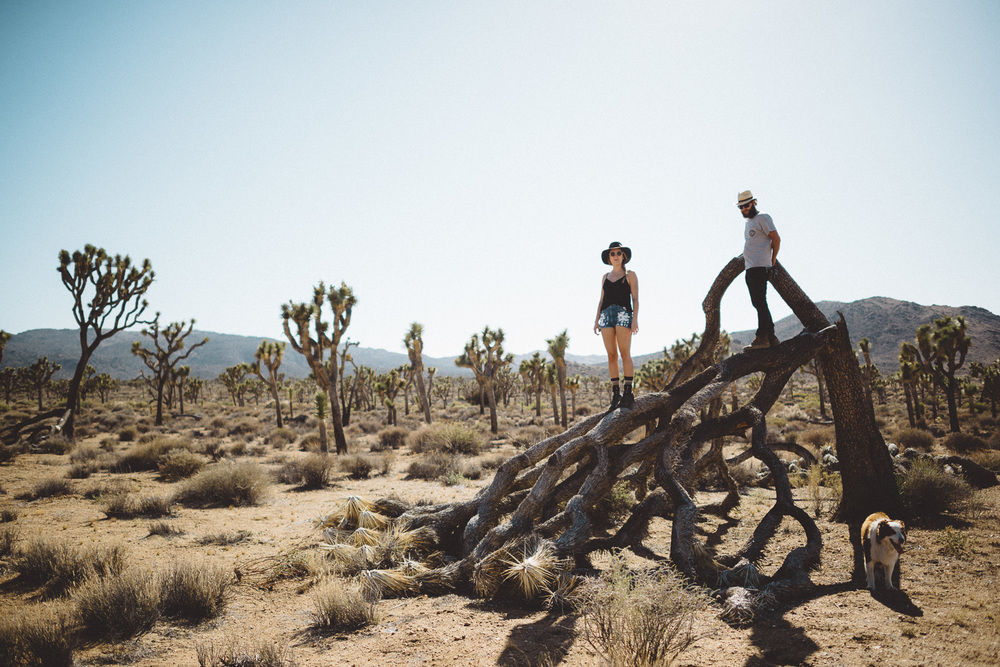 lex_mike_joshua_tree_photography_5680.jpg