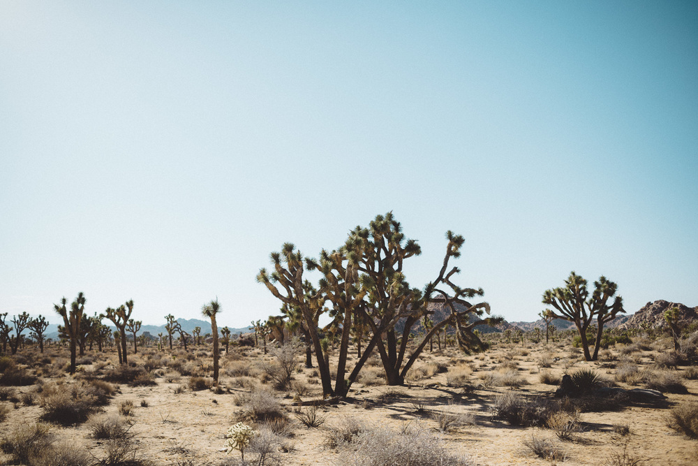 lex_mike_joshua_tree_photography_5720.jpg