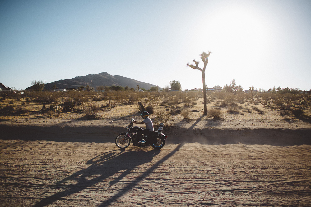 lex_mike_joshua_tree_photography_5784.jpg