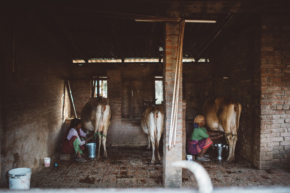 good-shepherd-agricultural-mission-2816.jpg