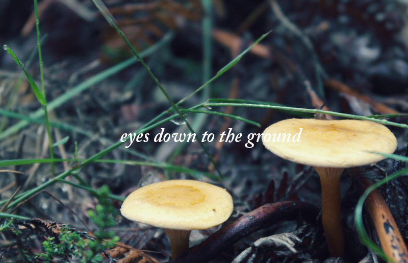eyes down to the ground