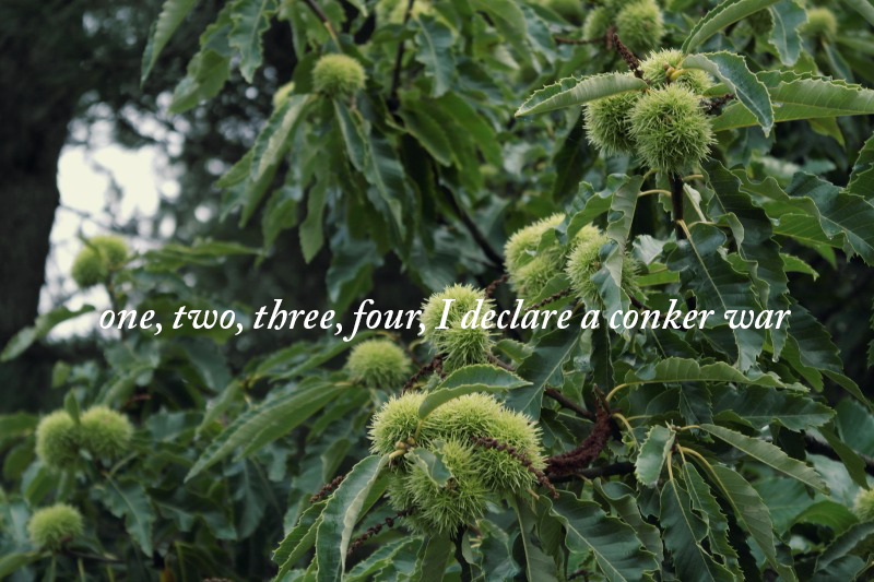 one two three four - I declare a conker war