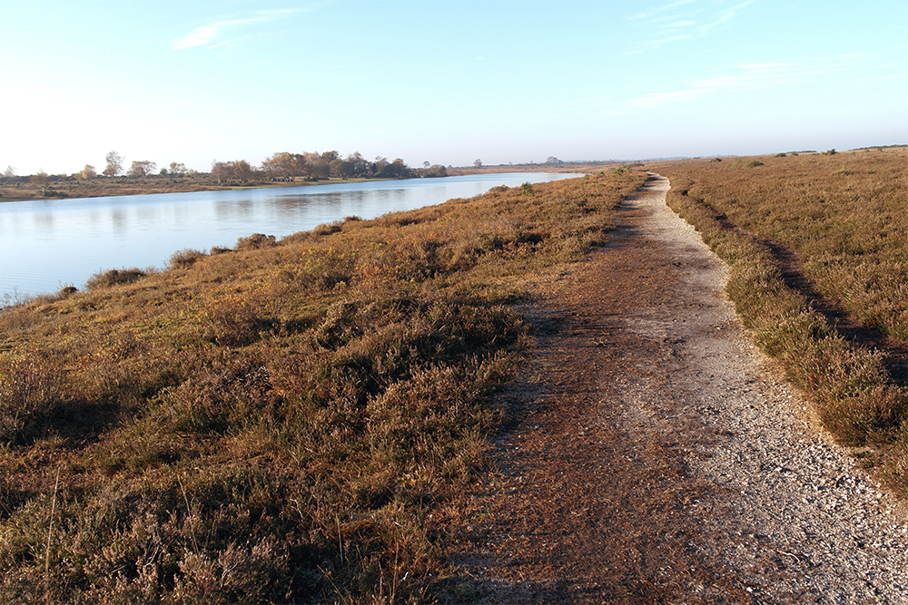 Hatchet Pond, The New Forest