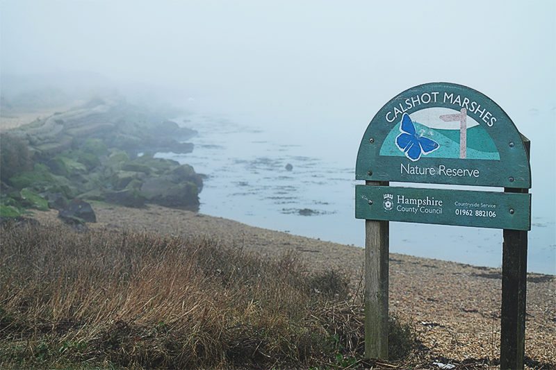 Foggy day at Calshot Nature Reserve