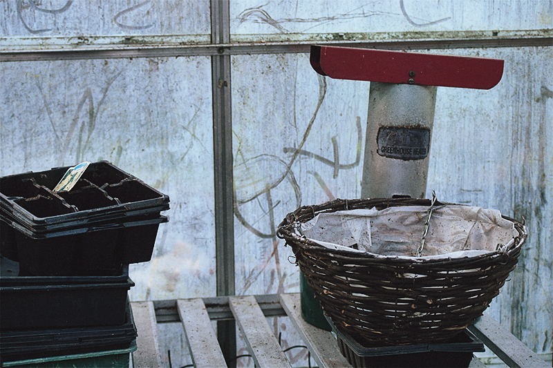 Inside the winter Greenhouse
