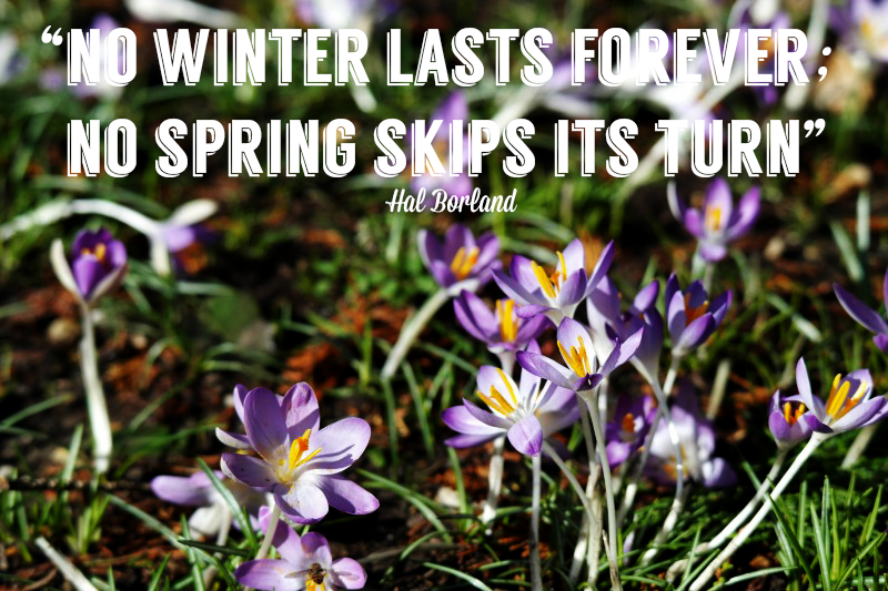"""no winter lasts forever; no spring skips its turn"" Hal Borland"