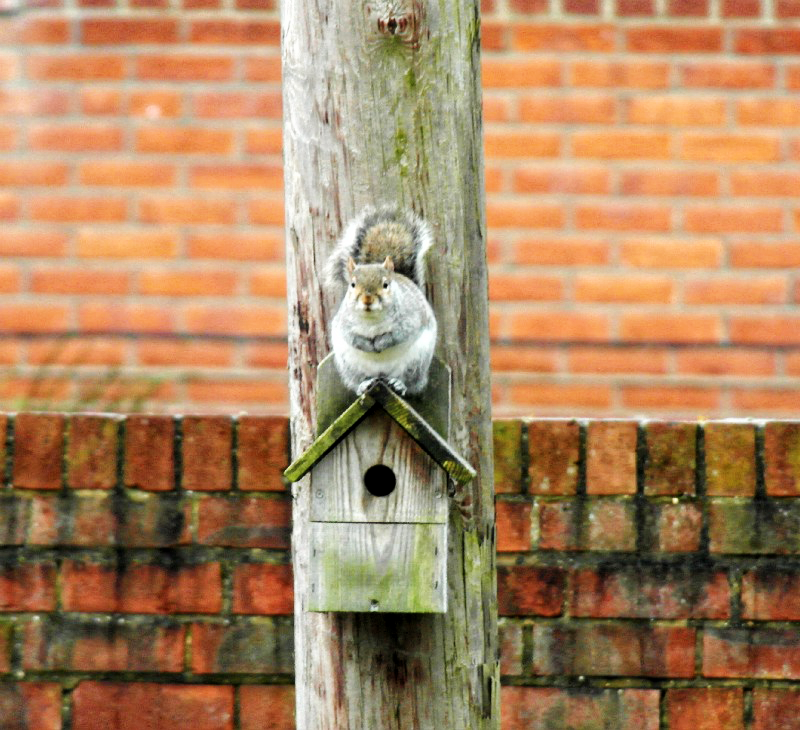 Squirrel sat on a bird box