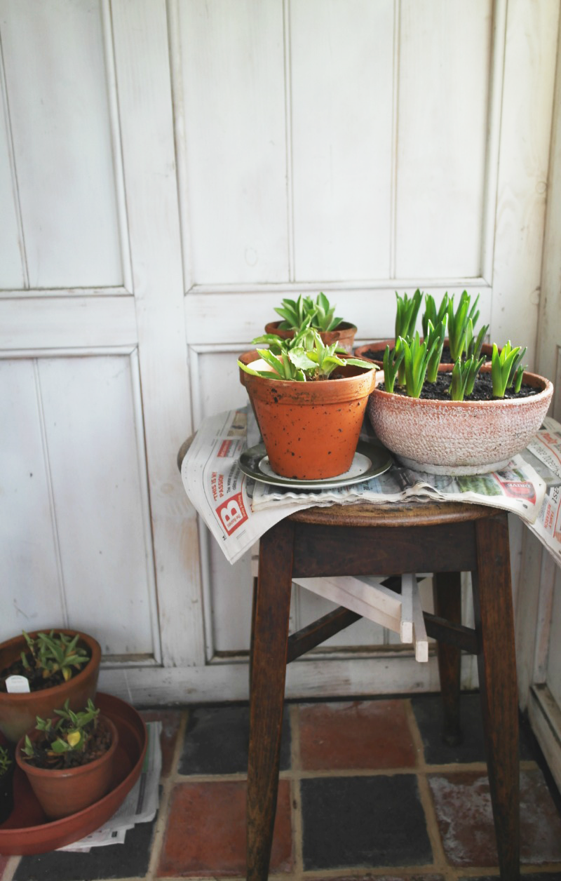 Plants in Summerhouse