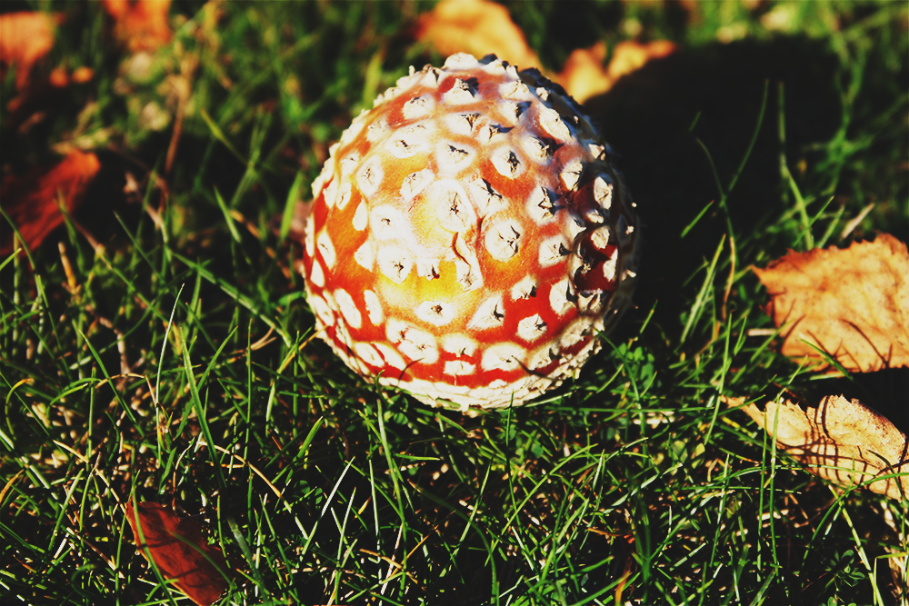 Fungi in the New Forest