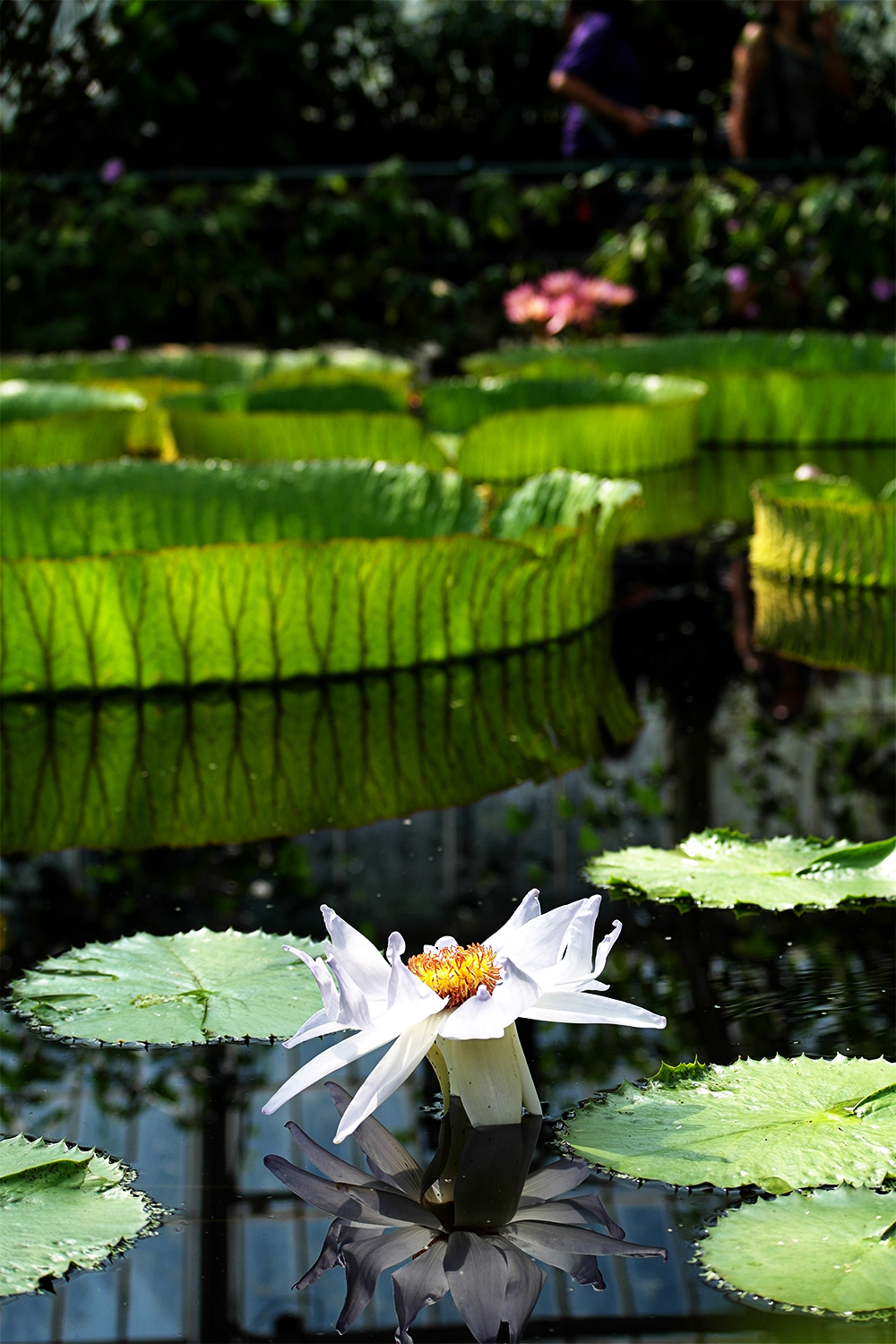 Waterlily House, Kew Gardens