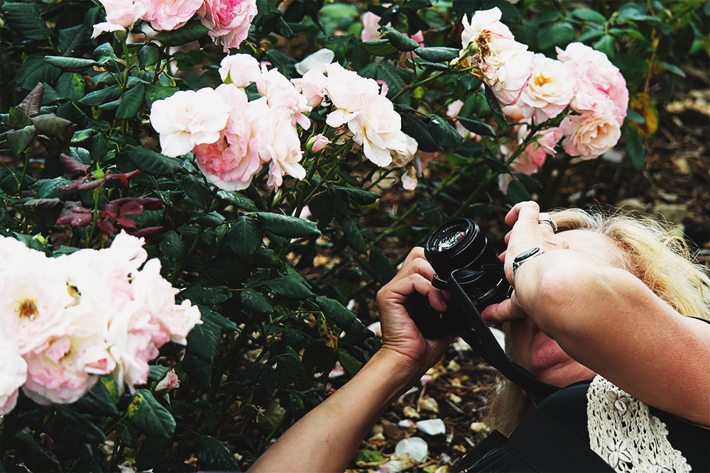 Kriss gets down low to experiment with light behind petals