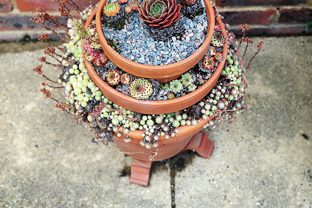 Tiered succulent and alpine planter