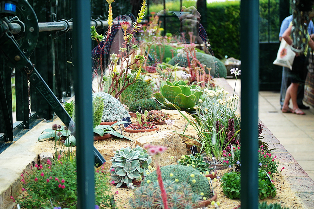 Inside the Alpine House at RHS Wisley