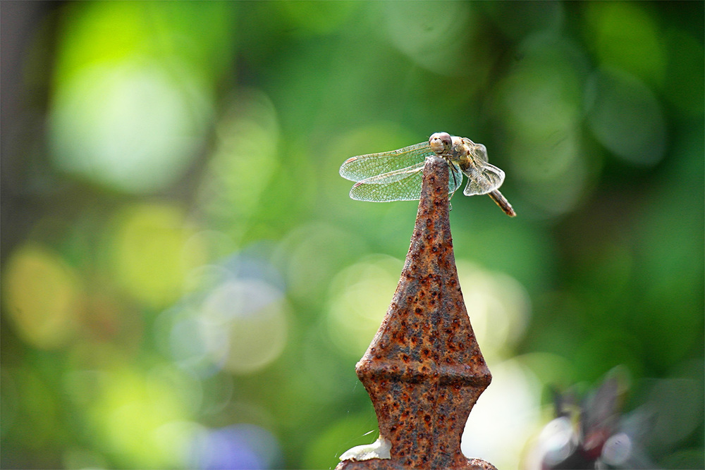 Dragonfly on railing